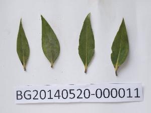 ( - DNAFR000730)  @11 [ ] Copyrights (2014) Gujarat State Biotechnology Mission Gujarat State Biotechnology Mission