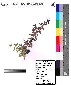( - DNAFR000104)  @11 [ ] Copyright (2012) Unspecified Gujarat State Biotechnology Mission