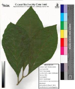 (Tectona - DNAFR000004)  @11 [ ] Copyright (2012) Gujarat Biodiversity Gene Bank Gujarat Biodiversity Gene Bank,Gujarat State Biotechnology Mission