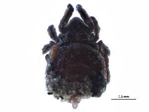 (Plasmobatidae - BIOUG24057-C04)  @13 [ ] CreativeCommons - Attribution Non-Commercial Share-Alike (2015) CBG Photography Group Centre for Biodiversity Genomics