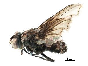 (Prophorostoma - BIOUG13515-E06)  @11 [ ] CreativeCommons - Attribution Non-Commercial Share-Alike (2015) BIO Photography Group Biodiversity Institute of Ontario