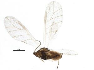 (Hydaphias - BIOUG14953-C02)  @13 [ ] CreativeCommons - Attribution Non-Commercial Share-Alike (2014) CBG Photography Group Centre for Biodiversity Genomics