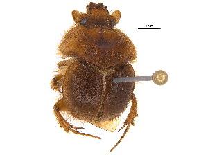 (Neoathyreus - BIOUG17899-G12)  @15 [ ] CreativeCommons - Attribution Non-Commercial Share-Alike (2015) BIO Photography Group Biodiversity Institute of Ontario