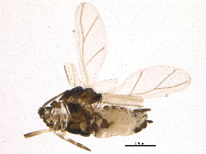(Toxopterina - BIOUG16999-E10)  @13 [ ] CreativeCommons - Attribution Non-Commercial Share-Alike (2015) BIO Photography Group Biodiversity Institute of Ontario