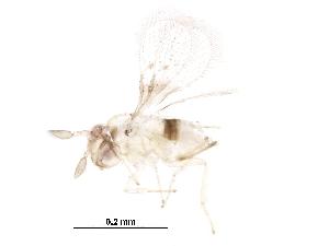 (Trichogrammatoidea - BIOUG27194-E10)  @13 [ ] CreativeCommons - Attribution Non-Commercial Share-Alike (2016) CBG Photography Group Centre for Biodiversity Genomics