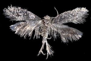 (Tridentaformidae - 2011GM-0109)  @14 [ ] Copyright (2011) Gary McDonald Unspecified