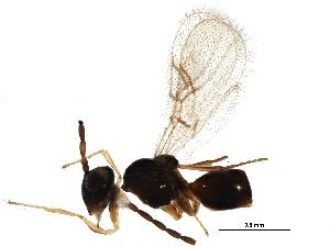 (Figitidae - BIOUG15189-C10)  @14 [ ] CreativeCommons - Attribution Non-Commercial Share-Alike (2015) BIO Photography Group Biodiversity Institute of Ontario