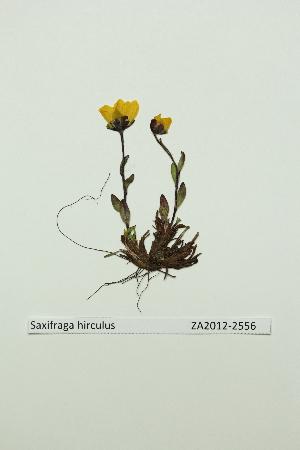 ( - ZA2012-2556)  @11 [ ] Copyright (2013) Tomas Roslin University of Helsinki