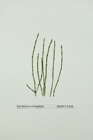( - ZA2012-5148)  @11 [ ] Copyright (2013) Tomas Roslin University of Helsinki