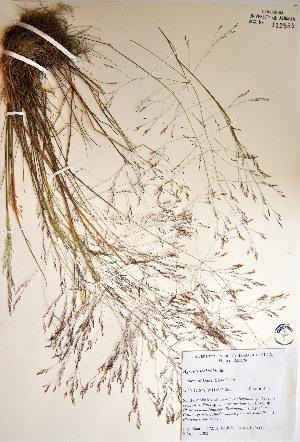 ( - 03-JMS-0272)  @11 [ ] Copyright (2007) University of Alberta Herbarium Unspecified