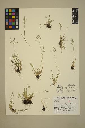 ( - 08-DPYC-06)  @11 [ ] Copyright (2010) University of British Columbia Herbarium University of British Columbia