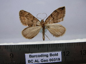 ( - BC AL Geo 00319)  @12 [ ] Copyright (2010) Unspecified Research Collection of Antoine Leveque
