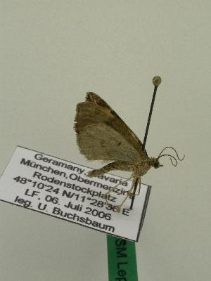 ( - BC ZSM Lep 01134)  @13 [ ] Copyright (2010) Unspecified Bavarian State Collection of Zoology (ZSM)