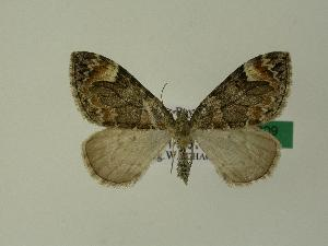 ( - BC ZSM Lep 01209)  @14 [ ] Copyright (2010) Unspecified Bavarian State Collection of Zoology (ZSM)