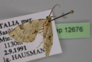 ( - BC ZSM Lep 12676)  @13 [ ] Copyright (2010) Unspecified Bavarian State Collection of Zoology (ZSM)