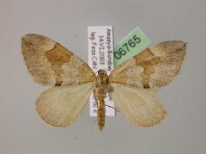 ( - BC ZSM Lep 06765)  @15 [ ] Copyright (2010) Unspecified Bavarian State Collection of Zoology (ZSM)