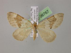 ( - BC ZSM Lep 06767)  @15 [ ] Copyright (2010) Unspecified Bavarian State Collection of Zoology (ZSM)