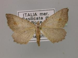 ( - BC ZSM Lep 14216)  @11 [ ] Copyright (2010) Unspecified Bavarian State Collection of Zoology (ZSM)