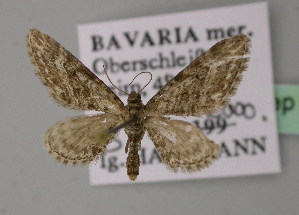 ( - BC ZSM Lep 22320)  @13 [ ] Copyright (2010) Unspecified Bavarian State Collection of Zoology (ZSM)
