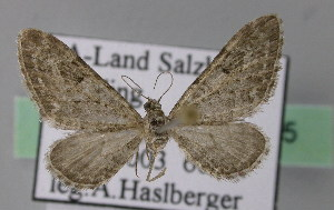 ( - BC ZSM Lep 22825)  @14 [ ] Copyright (2010) Unspecified Bavarian State Collection of Zoology (ZSM)