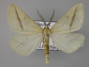 ( - BC ZSM Lep 24073)  @14 [ ] Copyright (2010) Unspecified Bavarian State Collection of Zoology (ZSM)