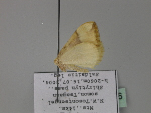 ( - BC ZSM Lep 27586)  @13 [ ] Copyright (2010) Unspecified Bavarian State Collection of Zoology (ZSM)