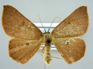 ( - RCIM 0085)  @11 [ ] Copyright (2010) Iva Mihoci Croatian Natural History Museum