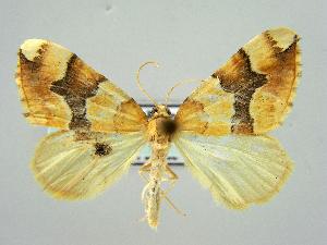 ( - RCIM 0114)  @14 [ ] Copyright (2010) Iva Mihoci Croatian Natural History Museum