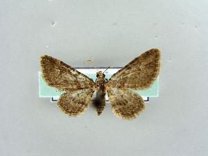 ( - RCIM 0158)  @13 [ ] Copyright (2010) Iva Mihoci Croatian Natural History Museum