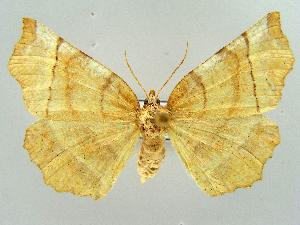 ( - RCIM 0169)  @13 [ ] Copyright (2010) Iva Mihoci Croatian Natural History Museum