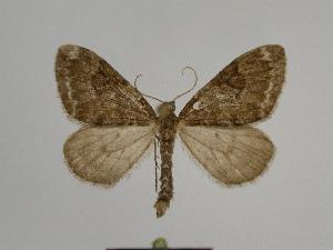 ( - SE MNC Lep 00805)  @11 [ ] Copyright (2011) Sven Erlacher Museum of Natural History Chemnitz