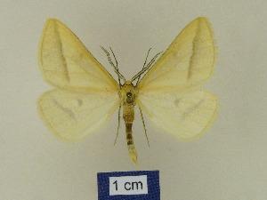 ( - BMB Lep 00615)  @13 [ ] Bernd Müller / ZSM (2012) Bernd Muller Bavarian State Collection of Zoology