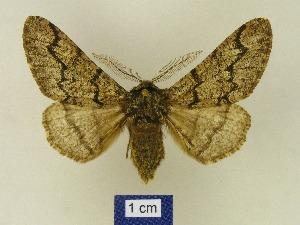 ( - BMB Lep 00623)  @14 [ ] Bernd Müller / ZSM (2012) Bernd Muller Bavarian State Collection of Zoology