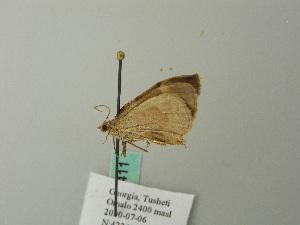 ( - BC ZSM Lep 66411)  @12 [ ] Copyright (2012) Axel Hausmann/Bavarian State Collection of Zoology (ZSM) Bavarian State Collection of Zoology