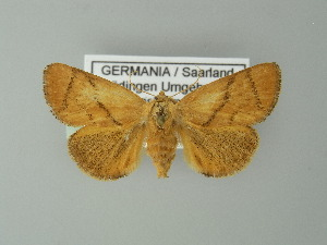 ( - BC ZSM Lep 67119)  @15 [ ] Copyright (2013) Axel Hausmann/Bavarian State Collection of Zoology (ZSM) Bavarian State Collection of Zoology
