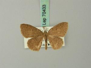 ( - BC ZSM Lep 70433)  @11 [ ] Copyright (2014) Axel Hausmann/Bavarian State Collection of Zoology (ZSM) SNSB, Zoologische Staatssammlung Muenchen