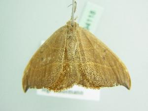 ( - BC ZSM Lep 94118)  @11 [ ] by-nc-sa (2016) SNSB, Staatliche Naturwissenschaftliche Sammlungen Bayerns ZSM (SNSB, Zoologische Staatssammlung Muenchen)