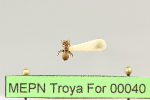 ( - MEPN Troya For 00040)  @12 [ ] Copyright (2012) Adrian Troya MEPN