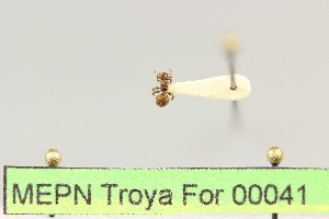 ( - MEPN Troya For 00041)  @12 [ ] Copyright (2012) Adrian Troya MEPN