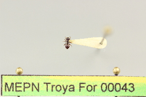( - MEPN Troya For 00043)  @12 [ ] Copyright (2012) Adrian Troya MEPN