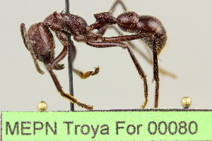 ( - MEPN Troya For 00080)  @15 [ ] Copyright (2012) Adrian Troya MEPN