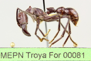 ( - MEPN Troya For 00081)  @11 [ ] Copyright (2012) Adrian Troya MEPN