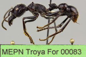 ( - MEPN Troya For 00083)  @14 [ ] Copyright (2012) Adrian Troya MEPN