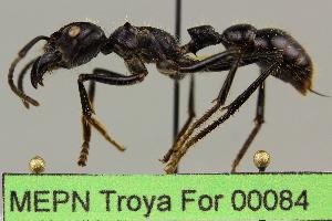 ( - MEPN Troya For 00084)  @11 [ ] Copyright (2012) Adrian Troya MEPN