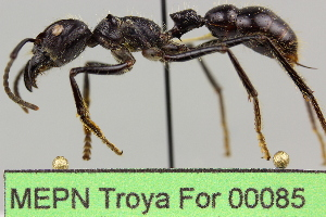 ( - MEPN Troya For 00085)  @11 [ ] Copyright (2012) Adrian Troya MEPN