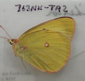 ( - 763NK-TA2)  @13 [ ] Unspecified (default): All Rights Reserved  Unspecified Unspecified