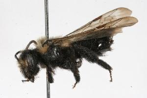 ( - Bee191)  @11 [ ] Copyright (2010) Unspecified Unspecified