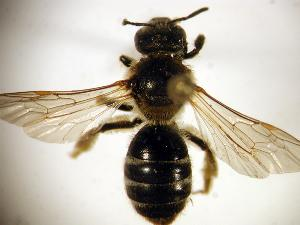( - Bee9-16)  @13 [ ] Copyright (2010) Unspecified Unspecified