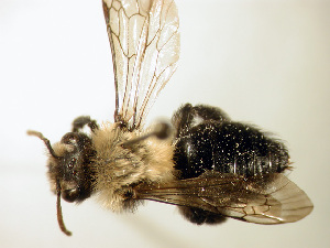 ( - Bee188)  @15 [ ] Copyright (2010) Unspecified Unspecified