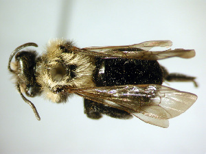 ( - Bee191)  @13 [ ] Copyright (2010) Unspecified Unspecified